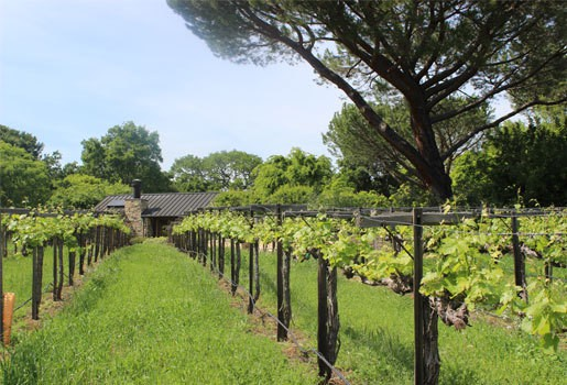 private-estates-vineyards